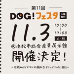 11dogfesta