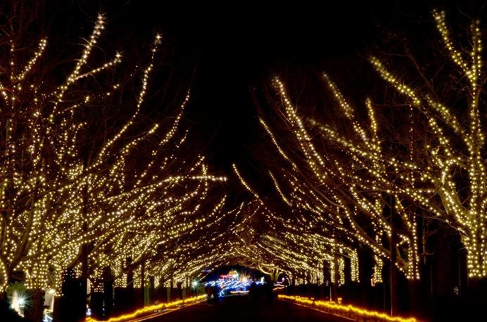出典:国営昭和記念公園